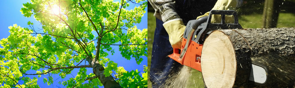 Tree Services Seminole